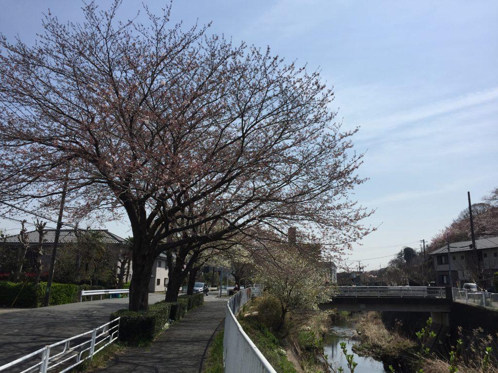川沿いを歩いて清来寺へ