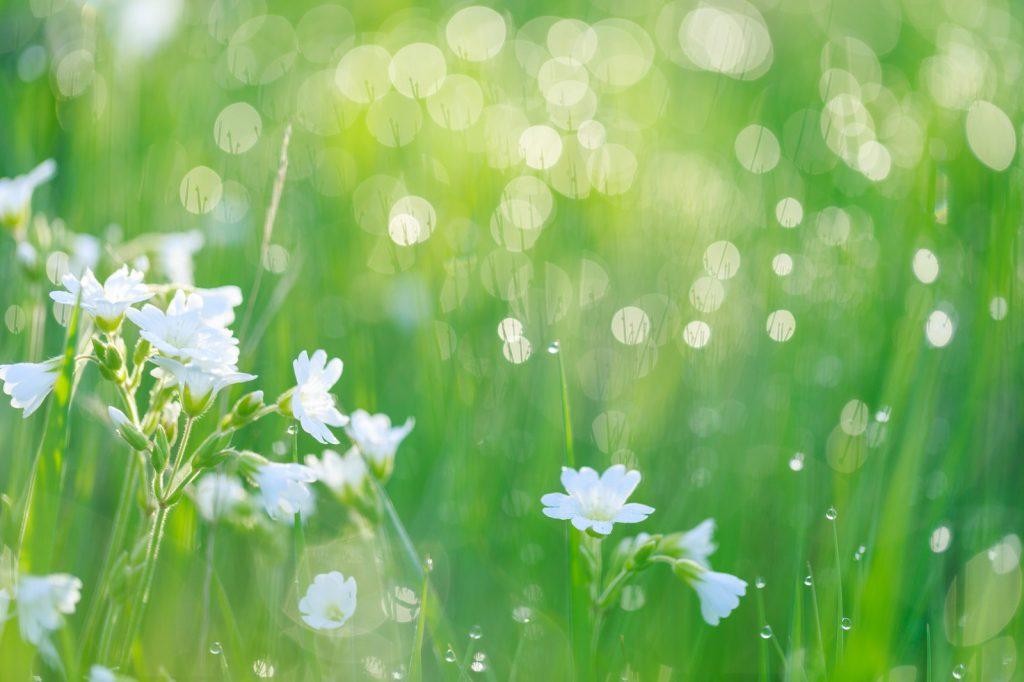 草原と白い花