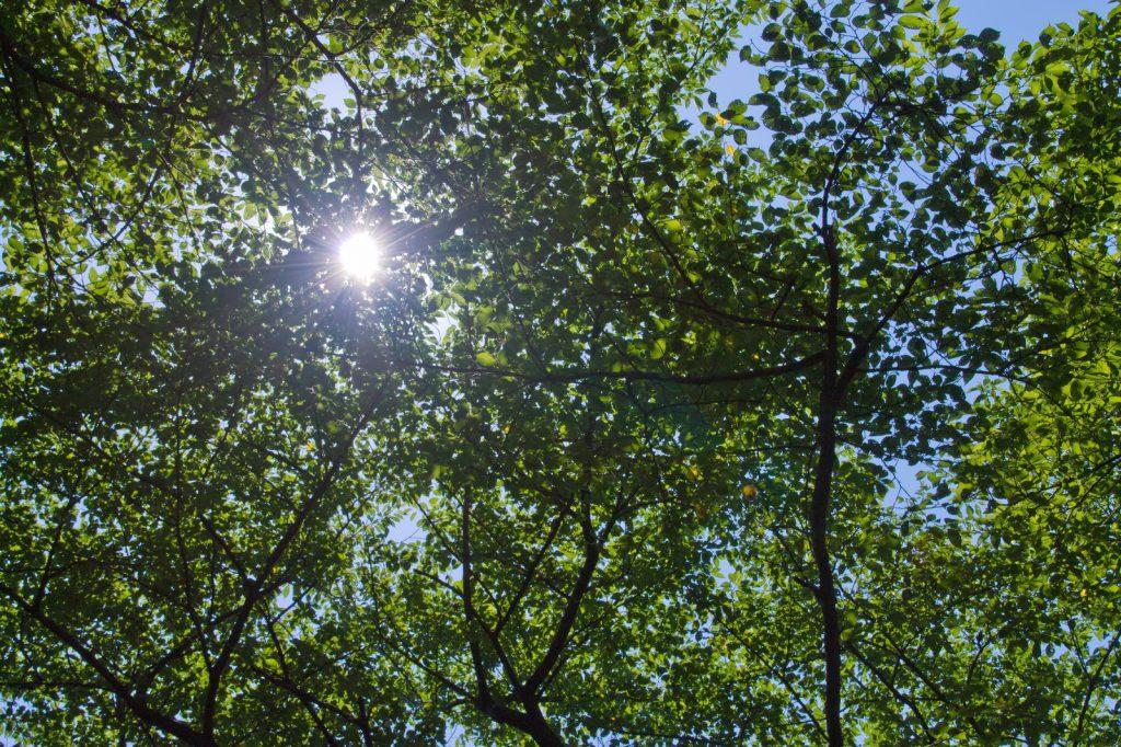青葉と木漏れ日