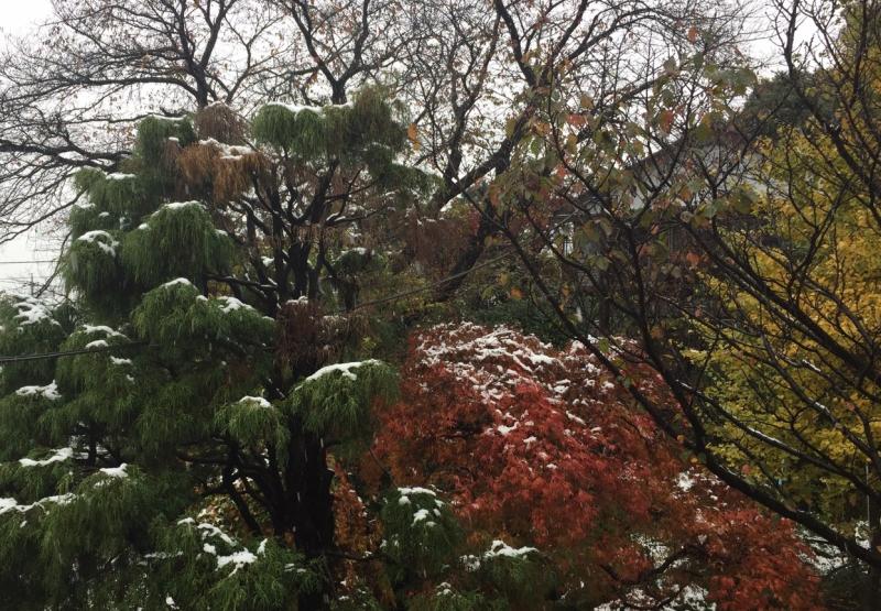 横浜の初雪_2016年11月_03