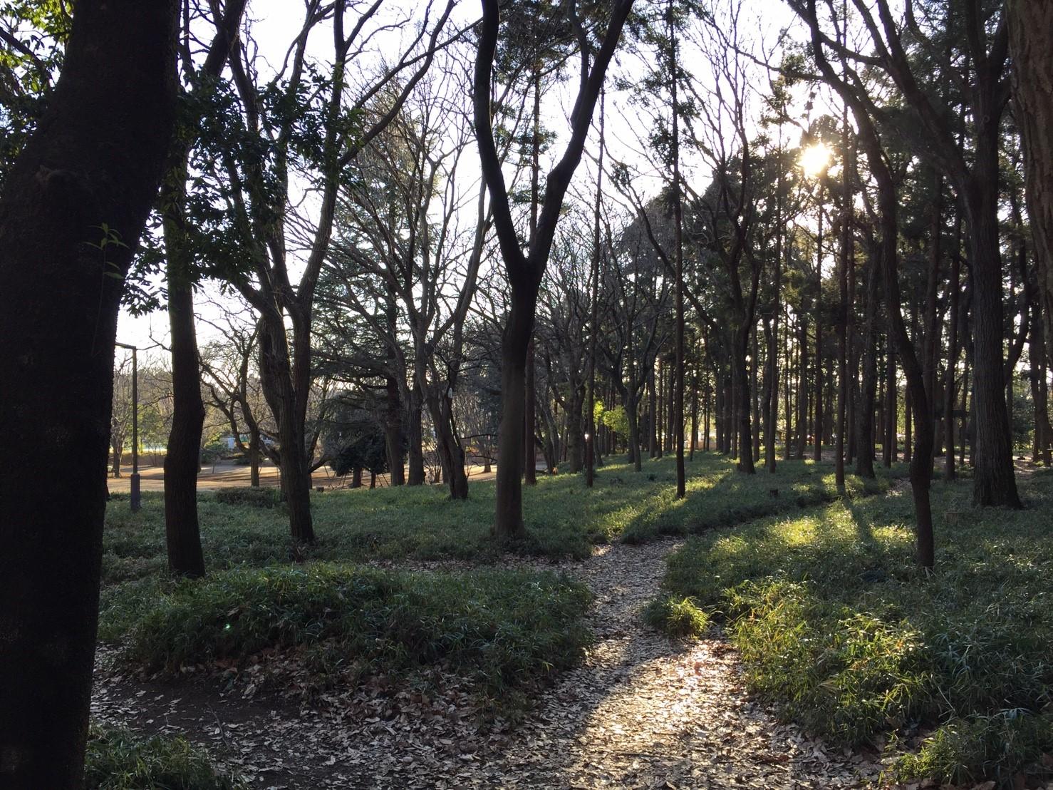 鶴間公園の雑木林